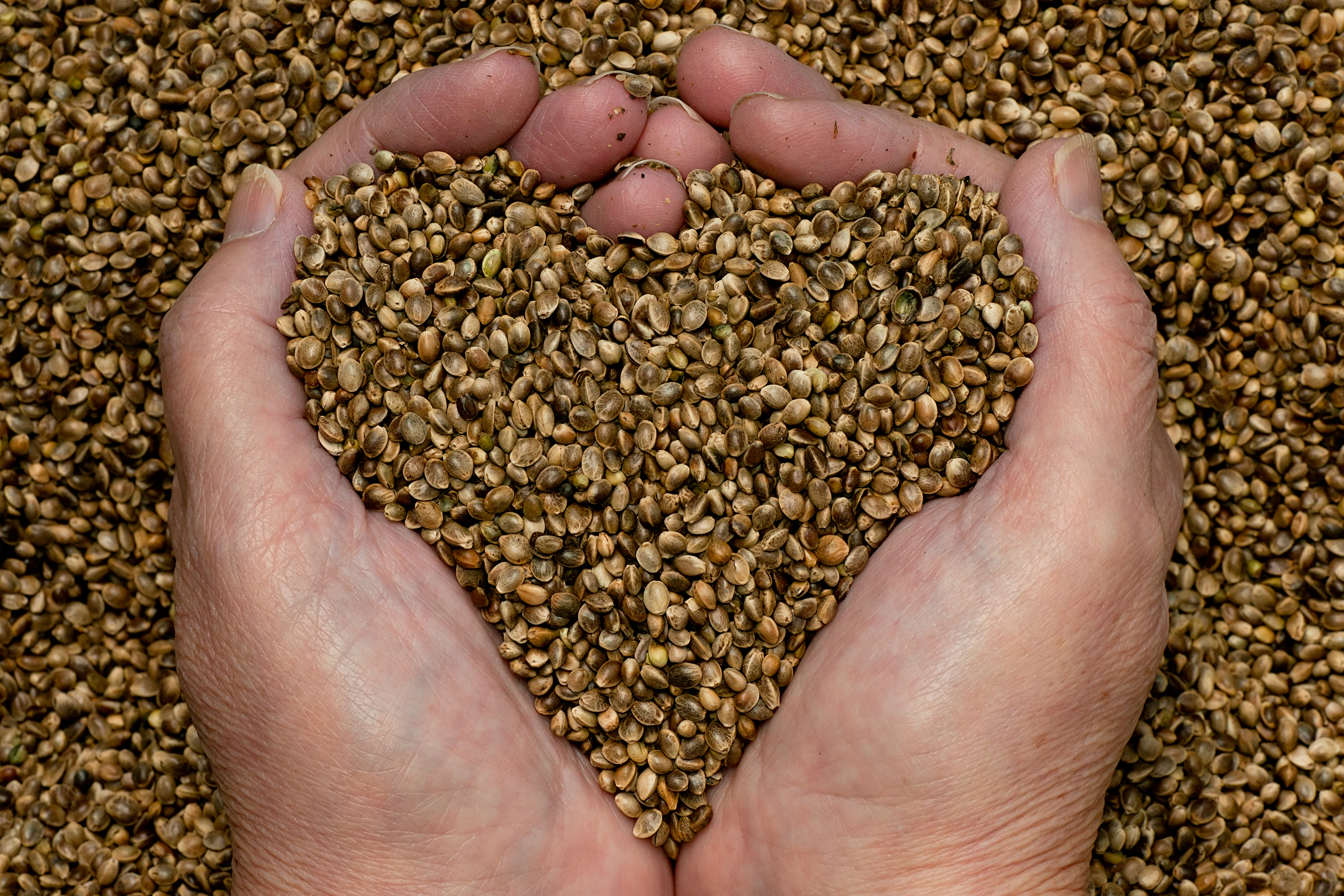 hemp-seeds-hands3