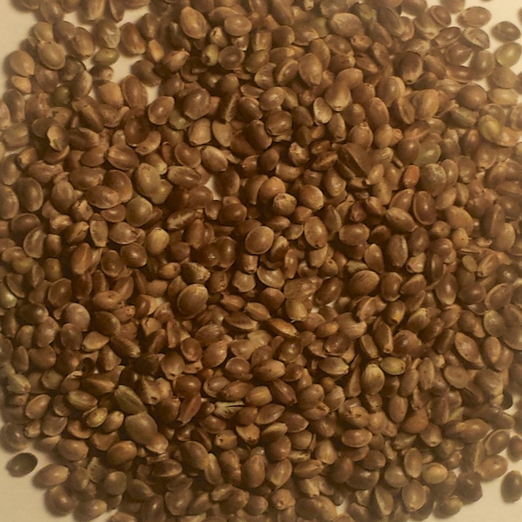 A superfood Hemp Seeds contain an amazing amount of protein and amino acids